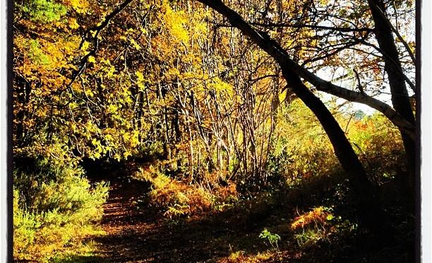Autumn Walk #autumn #woodland #camberley