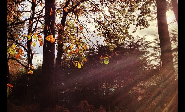 Last few leaves… #autumn #woodland #camberley